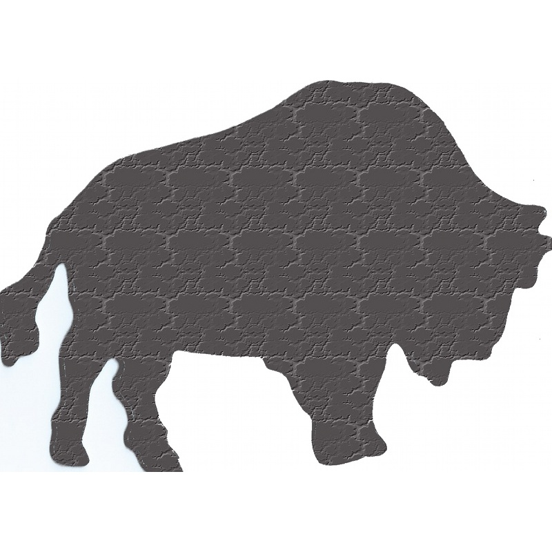 More about bison