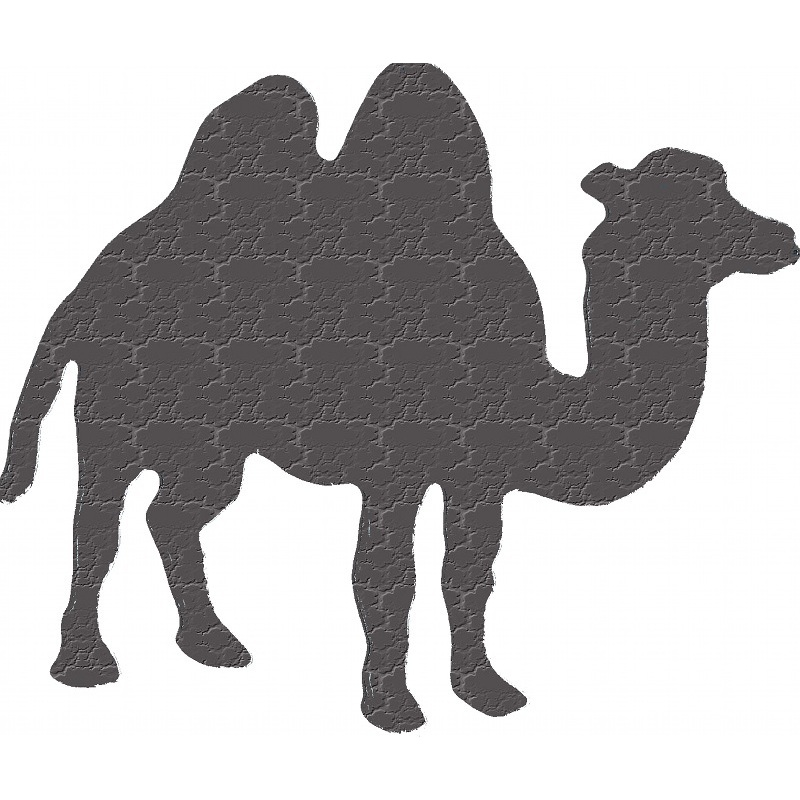 More about camel