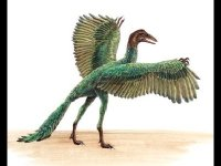 Archaeopteryx image