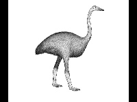 Elephant Bird image