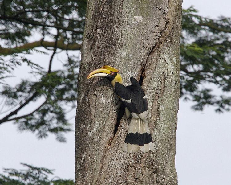 Bohey Dulang of Semporna Islands Park  MySabahcom