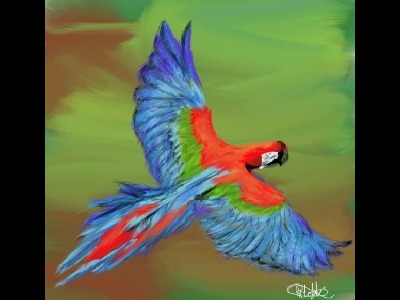 Macaw  -  Red-and-green Macaw