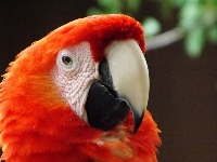macaw/macaw_Scarlet_Macawimage2