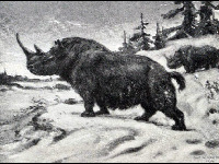 Woolly Rhinoceros image