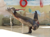 Sea Lion image