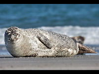 Common Seal image
