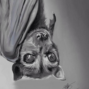 Featured Animal Artist